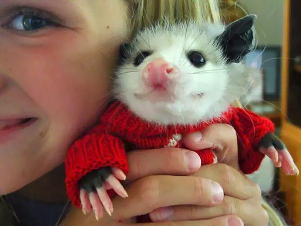 寒いからニットのセーターを小動物に着せてみた画像 (18)