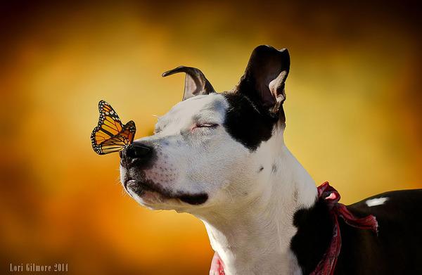 蝶と犬 2