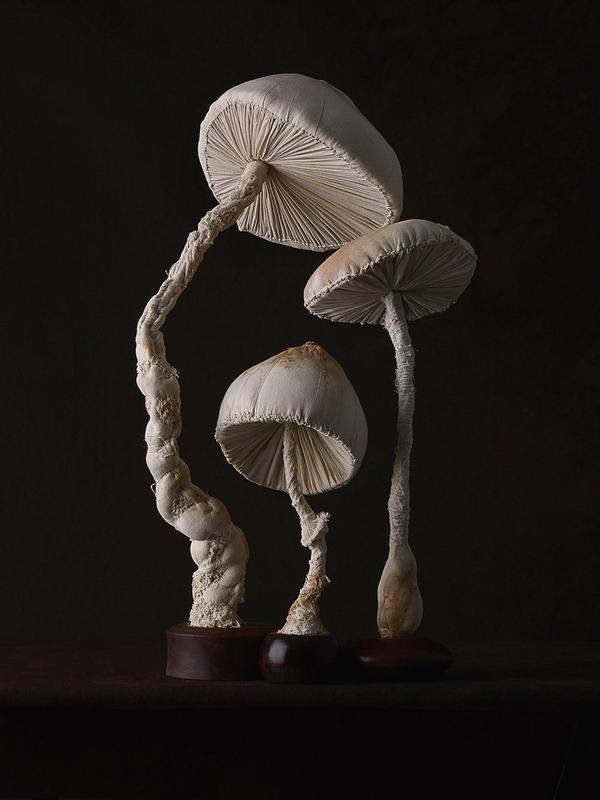 おいしそう?ヴィンテージな生地で作られたリアルなキノコ彫刻 (5)