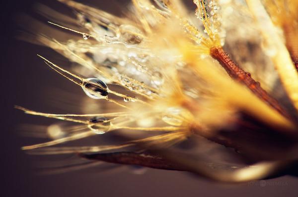 新しい命!植物の種子を撮影したマクロ写真 (10)