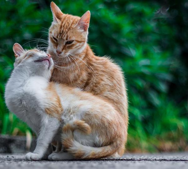 猫のバレンタインデー!【猫ラブラブ画像】 (10)