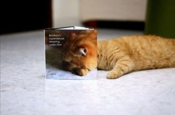 絵本に隠れる猫
