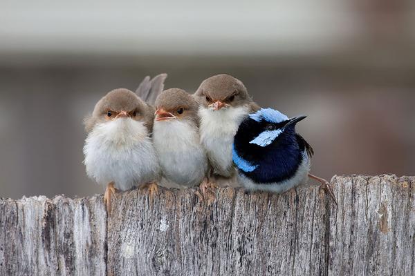 小鳥が温まる為に皆で寄り添っている可愛い画像 (5)