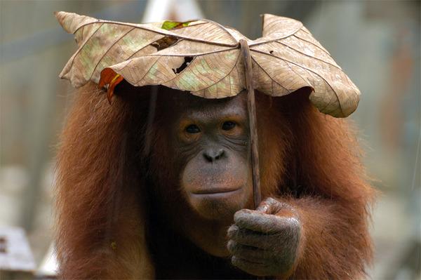 自然の傘を差す動物 8