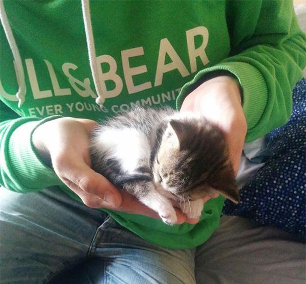 手の平の子猫