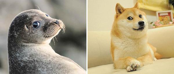 アザラシって犬そっくりじゃね?犬とアザラシを比較画像! (11)