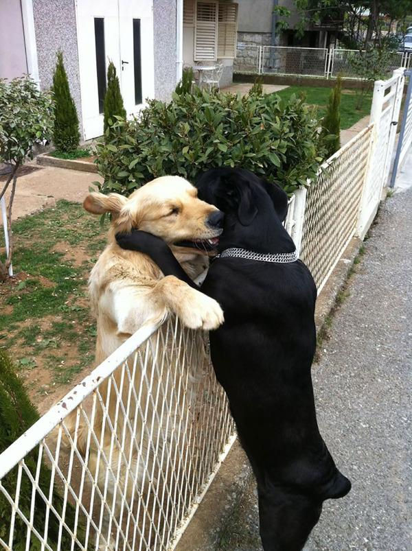 ハグする犬