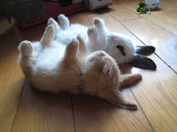 超ふわふわ!モフモフで愛らしいウサギの画像20枚 (1)