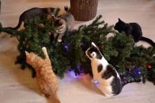 猫、あらぶる!クリスマスツリーに突っ込む猫画像