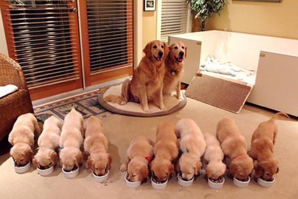 お母さん犬とその子犬達のソックリ集合写真!犬親子画像 (3)