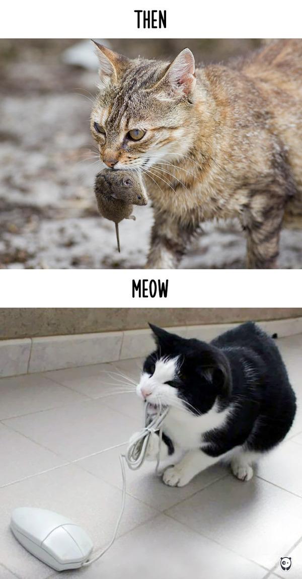 【猫画像】猫の生活を過去と現在で比較! (9)