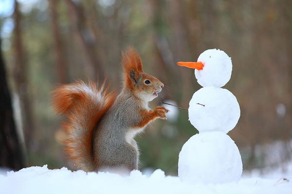 食べ物が入った雪だるまを発見したよ