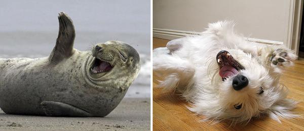 アザラシって犬そっくりじゃね?犬とアザラシを比較画像! (23)