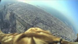 優雅に鷲が舞うバードビュー!ドバイでイーグルフライトの世界新記録