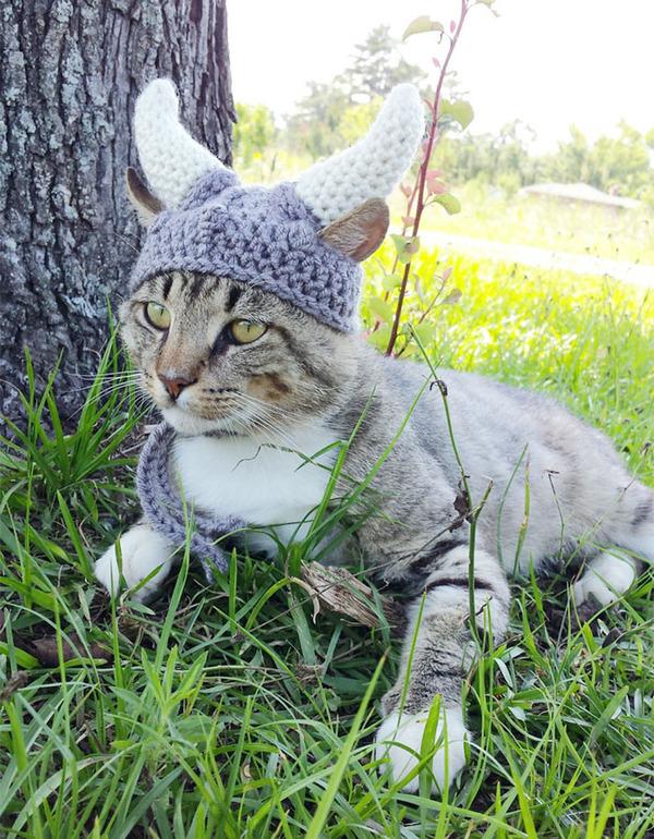 かわいさアップ?猫にぴったりなペット用ニット帽! (4)