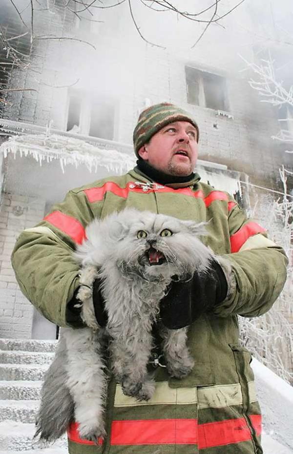 #19 ロシアの消防士が猫を救う