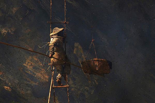 巨大な蜂の巣とのバトル!ネパールの伝統的な蜂蜜ハンター (5)