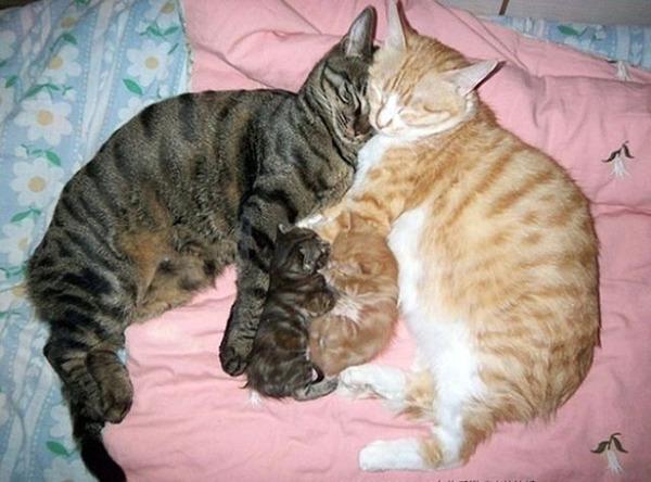 猫のバレンタインデー!【猫ラブラブ画像】 (31)