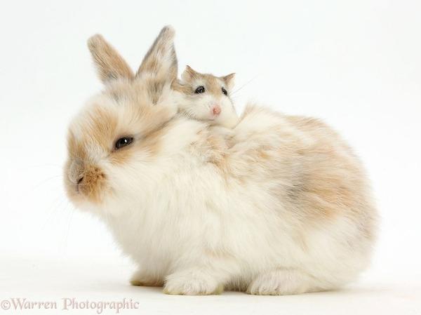 似てる!親が違うのにそっくりな動物画像30枚 (29)