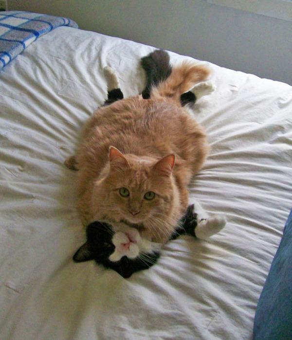 猫のバレンタインデー!【猫ラブラブ画像】 (65)