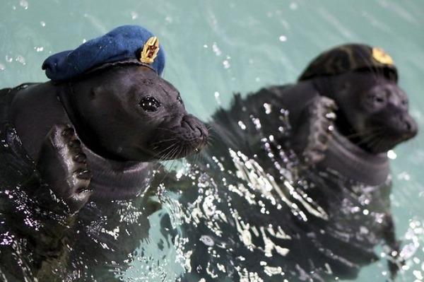 SEALS,ロシアのオットセイの軍事訓練、VEデー 3