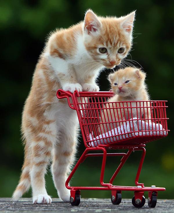 大人猫と子供猫の仲良し画像 (2)