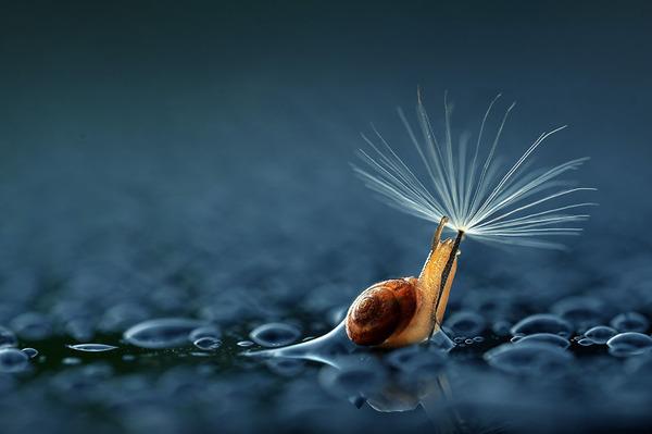 自然の傘を差す動物