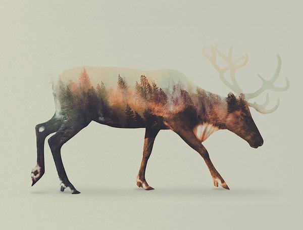 シカの二重露光写真byアンドレアス・リー