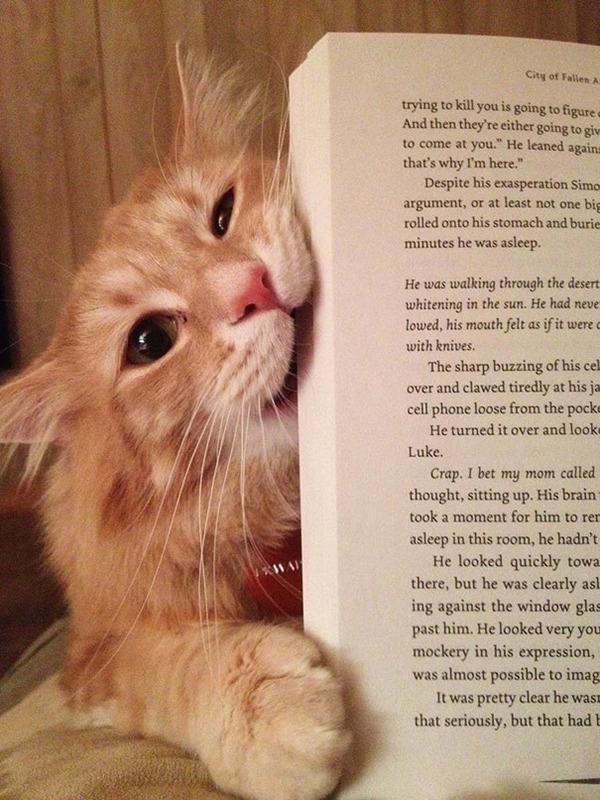 本を食い破ろうとする猫