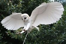 剥製みたい。紙と木で作られたリアルな鳥の模型アート!