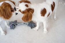わんこ!子犬たちの可愛いキス画像特集!