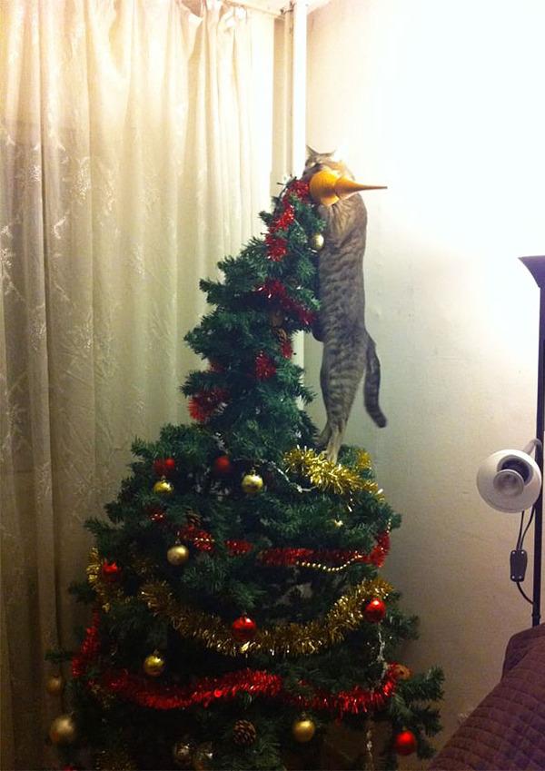 猫、あらぶる!クリスマスツリーに登る猫画像 (51)