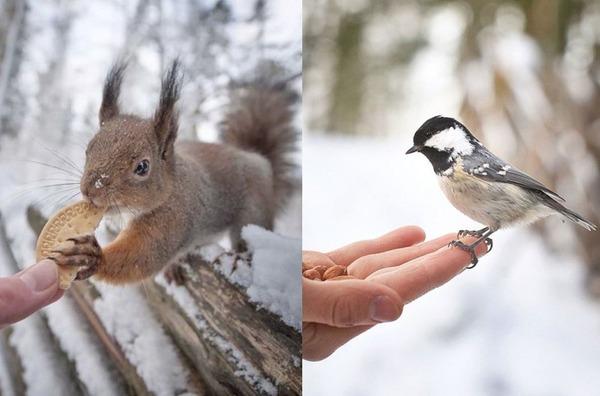 フィンランドの野生動物 5