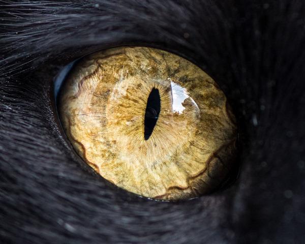 まさにキャッツアイ!綺麗な猫の瞳を撮影した画像16枚 (8)