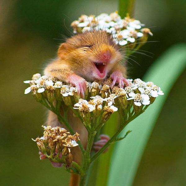ニッコリ。幸せそうな笑顔が素敵な動物画像特集! (22)