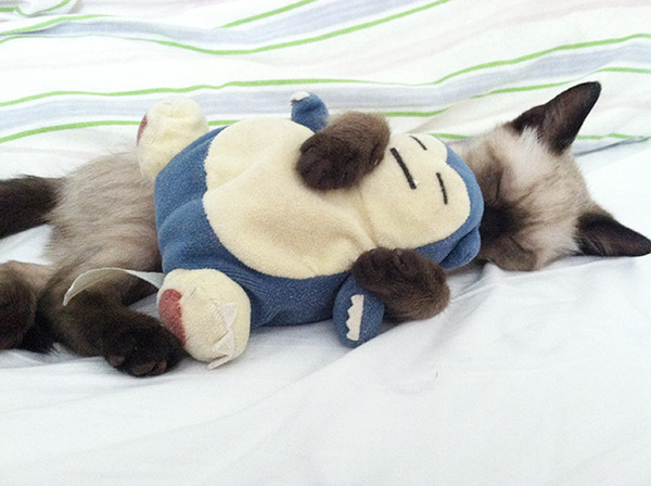 ぬいぐるみを抱き枕にする子猫