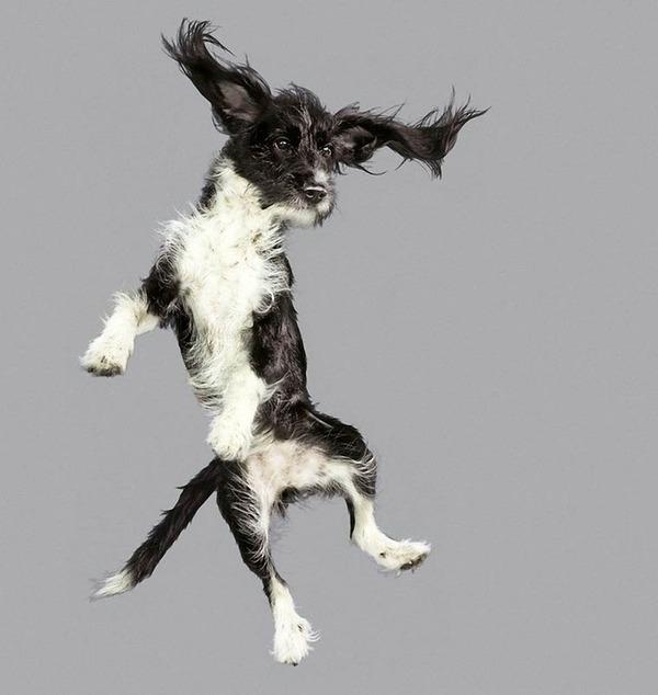 飛ぶ犬!空飛ぶわんこの絶妙な表情が逸品な写真 (12)