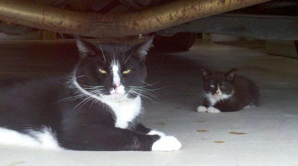 大人猫と子供猫の仲良し画像 (14)