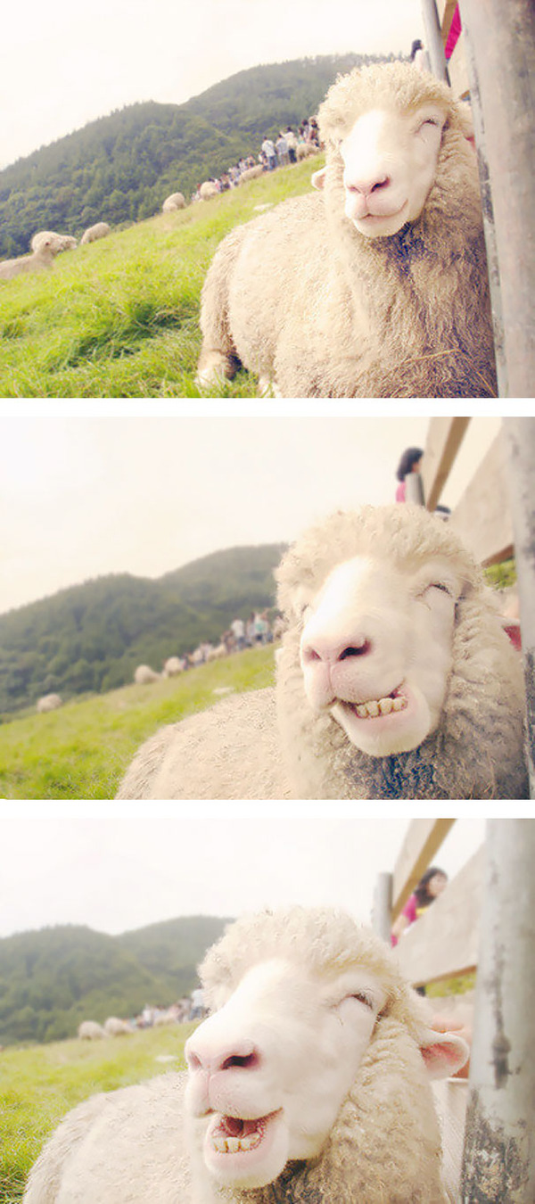 ニッコリ。幸せそうな笑顔が素敵な動物画像特集! (6)