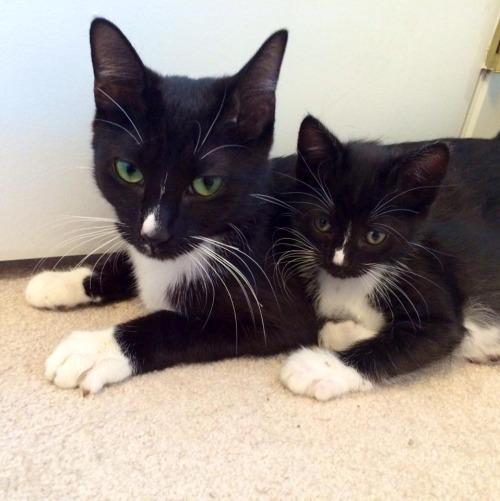 大人猫と子供猫の仲良し画像 (6)