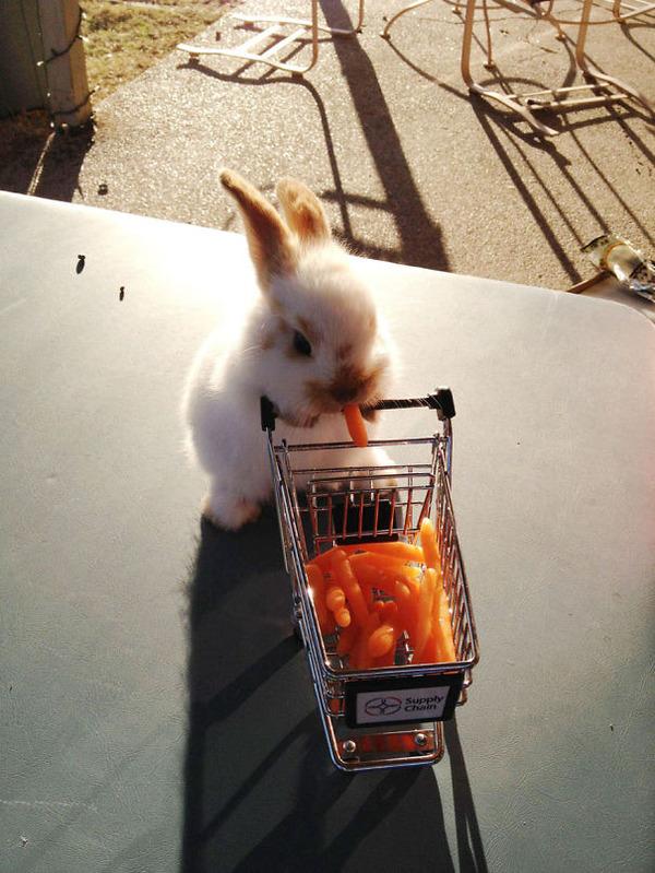 超ふわふわ!モフモフで愛らしいウサギの画像20枚 (3)