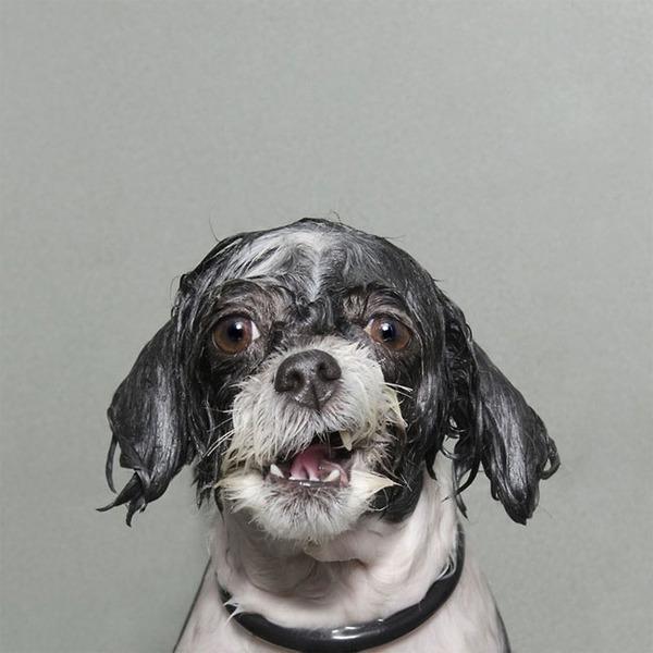 洗い立てだぜ!濡れた犬の写真シリーズ『Wet Dog』 (9)