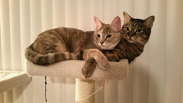 猫のバレンタインデー!【猫ラブラブ画像】 (18)