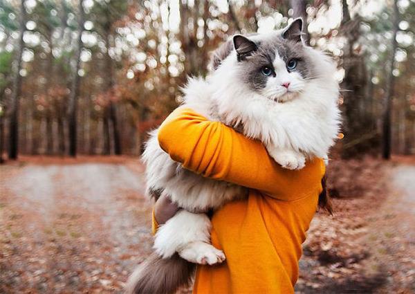 綿菓子フワフワ!モフモフしたくなる長毛種の猫画像 (23)