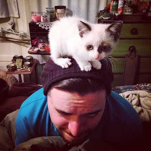 猫帽子 6