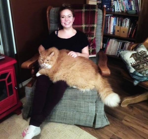 とても大きい猫の画像 31