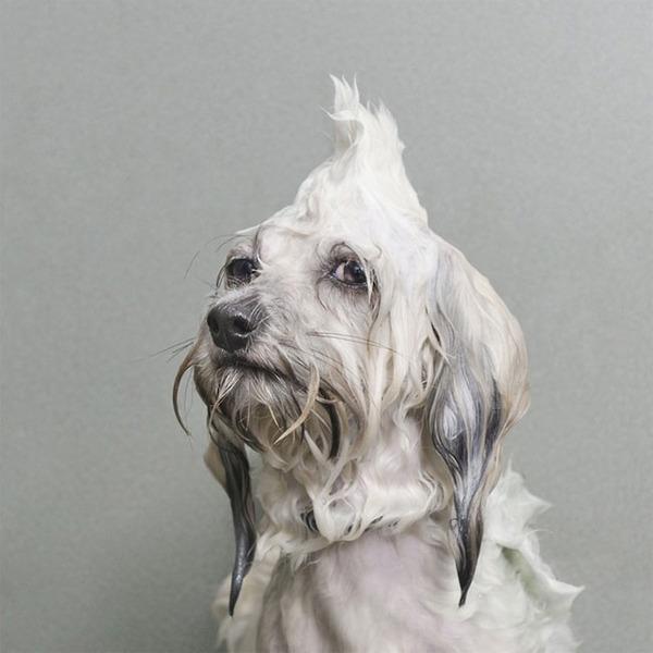 洗い立てだぜ!濡れた犬の写真シリーズ『Wet Dog』 (5)