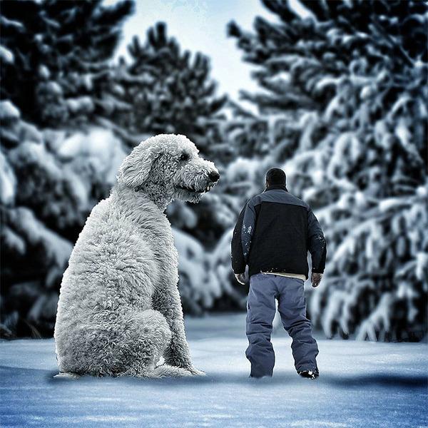 犬を大きくする!そんな夢をフォトショップの画像加工 (6)