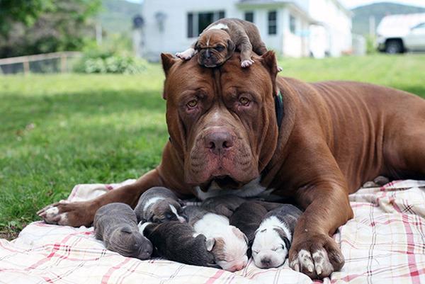 お母さん犬とその子犬達のソックリ集合写真!犬親子画像 (23)