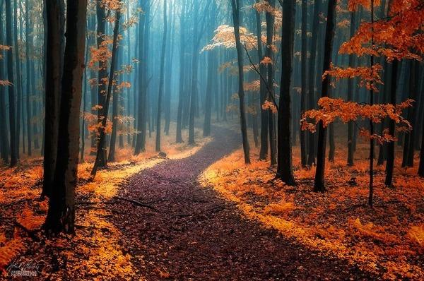 秋といえば紅葉や落葉の季節!美しすぎる秋の森の画像20枚 (1)